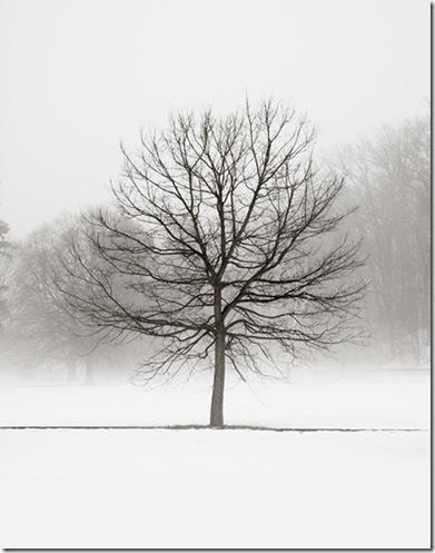 Vanilla Dream Tree