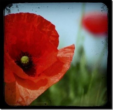 Poppy_AF